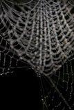 Gotas em um spriderweb Foto de Stock