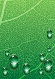 Gotas en fondo verde Fotografía de archivo