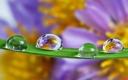 Gotas en la lámina de la hierba Imágenes de archivo libres de regalías