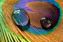 Gotas en la pluma del pavo real Imagen de archivo libre de regalías
