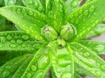 Gotas en las hojas Imagen de archivo libre de regalías
