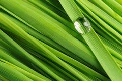 Gotas en una hierba Imagen de archivo libre de regalías