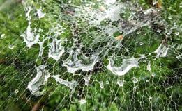 Gotas en Web de araña Fotos de archivo