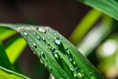 Gotas ensolarados da água em uma folha imagem de stock