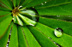Gotas macras del agua Foto de archivo