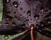 Gotas macras del agua Imagenes de archivo
