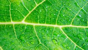 Gotas macras del agua en la hoja verde Foto de archivo