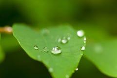 Gotas macro da água Foto de Stock