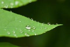 Gotas macro da água Imagens de Stock Royalty Free