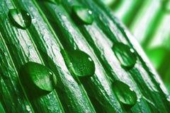 Gotas macro da água na folha verde Foto de Stock Royalty Free