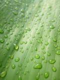Gotas macro da água nas folhas de bambu Fotografia de Stock Royalty Free