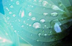 Gotas macro da foto Fotos de Stock