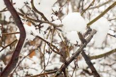 Gotas molhadas de derretimento da neve e da água em ramos de árvore na floresta na mola adiantada, fim acima, foco selecionado fotografia de stock royalty free
