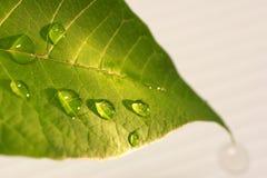 Gotas na folha Fotografia de Stock