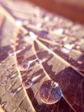 gotas na folha seca do outono fotos de stock