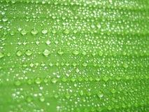 Gotas na folha verde Fotografia de Stock