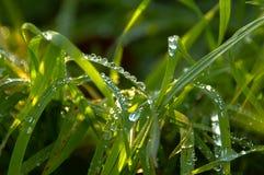 Gotas na grama Imagem de Stock