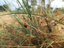 Gotas na grama Fotografia de Stock