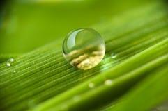 Gotas na grama Imagens de Stock