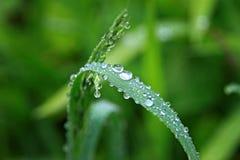 Gotas na vegetação verde Imagem de Stock