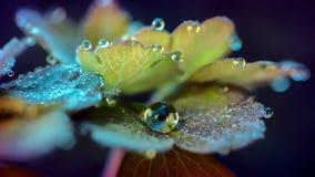 Gotas nas folhas Fotos de Stock