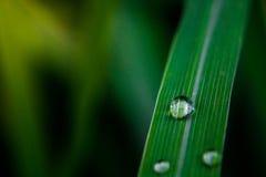 Gotas nas folhas Fotografia de Stock