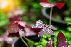 Gotas nas folhas na natureza Imagens de Stock Royalty Free