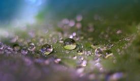 Gotas nas folhas verdes Foto de Stock Royalty Free
