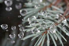 Gotas - naturaleza Imagen de archivo