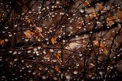 Gotas nos ramos Foto de Stock Royalty Free