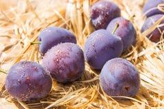 Gotas púrpuras del ciruelo Imagenes de archivo