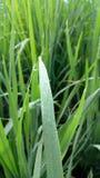 Gotas pequenas da água nas folhas Fotografia de Stock