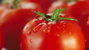 Gotas que caem no tomate video estoque