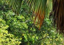 Gotas tropicais da chuva em uma região arborizada imagens de stock