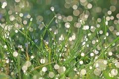 Gotas verdes Imagens de Stock Royalty Free