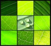 Gotas verdes da água das folhas da colagem no preto Imagens de Stock Royalty Free