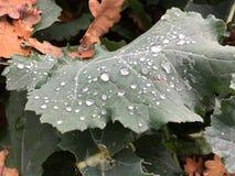 Gotas verdes da folha e de orvalho no outono imagens de stock
