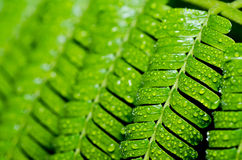 Gotas verdes de la hoja y del agua Imágenes de archivo libres de regalías