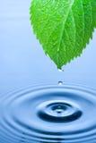 Gotas verdes del agua de la hoja Imagen de archivo