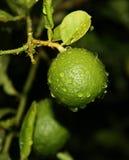 Gotas verdes del agua del whitn de la cal Fotos de archivo libres de regalías