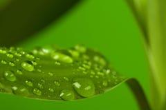 Gotas y hoja de bambú Fotos de archivo