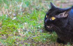 Gotcha-Black Cat Royalty Free Stock Images