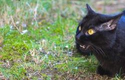 Gotcha-Black Cat Royalty Free Stock Images