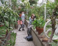 Taking pictures in a greenhouse Stock Image