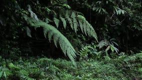 Gotejamento da água lentamente das folhas na floresta úmida ou na selva tropical vídeos de arquivo