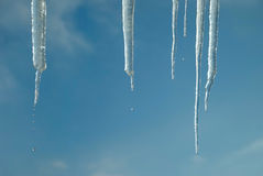 Gotejamento da neve thawing Imagem de Stock Royalty Free