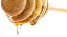 Gotejamento do mel do dipper do mel filme