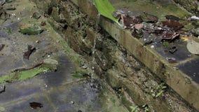 Gotejamento dos volume de água abaixo da parede de tijolo de pedra vídeos de arquivo