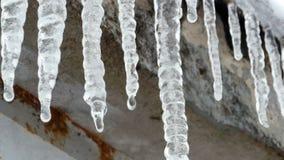 Goteo cristalino del hielo de los carámbanos almacen de video