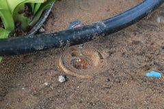 Goteo de la irrigación por del sistema del cierre imagen común para arriba - Fotos de archivo